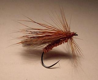 Sedge brown